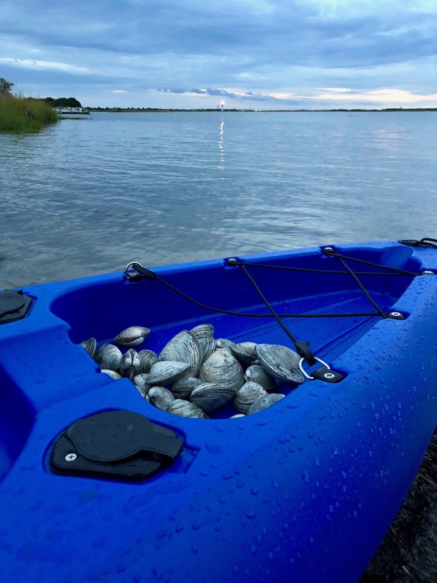 Kayak with clams